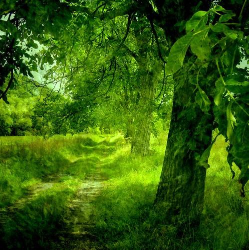 無料写真素材, 自然風景, 森林, 樹木, 緑色・グリーン