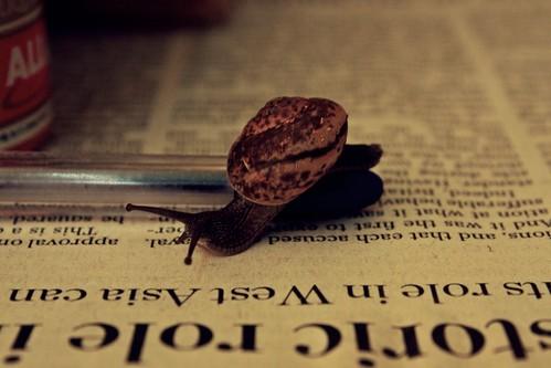 literary snail!!!
