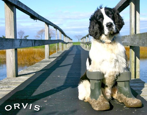 Orvis Cover Dog Contest - Ozzy