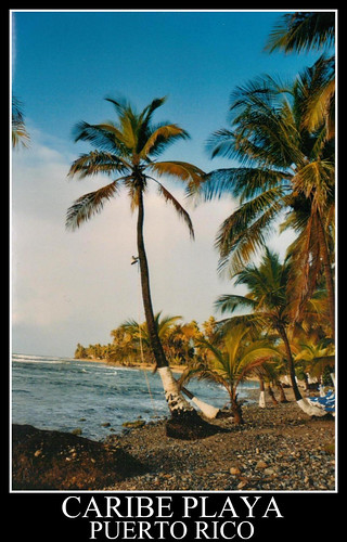 nature outdoors puertorico palmtrees caribbean caribbeansea caribeplaya