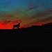 Montana King by Deby Dixon
