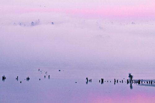 pink trees sky plants usa mist lake reflection nature colors weather fog clouds docks sunrise washington october unitedstates iso400 noflash 100mm redmond northamerica pilings minimalist locations 2010 locale lakesammamish manualmode daytodaylife camera:make=canon geo:state=washington exif:make=canon exif:focal_length=100mm exif:iso_speed=400 geo:city=redmond canoneos7d objectsthings hasmetastyletag naturallocale haslenstype selfrating3stars 1100secatf56 geo:countrys=usa ef70200mmf28lisiiusm camera:model=canoneos7d exif:model=canoneos7d exif:lens=ef70200mmf28lisiiusm exif:aperture=ƒ56 redmondwashingtonusa canonef7020028isii october12010 geo:lon=1220912745 geo:lat=476540359 subjectdistance2380m 47°3915n122°529w