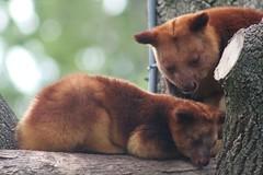 fox(0.0), dhole(0.0), kinkajou(0.0), nose(1.0), animal(1.0), mammal(1.0), fauna(1.0), marten(1.0), wildlife(1.0),