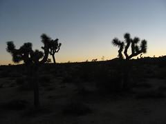 Joshua Tree National Park, California (41)