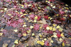 autumn leaves   only remaining on the ground