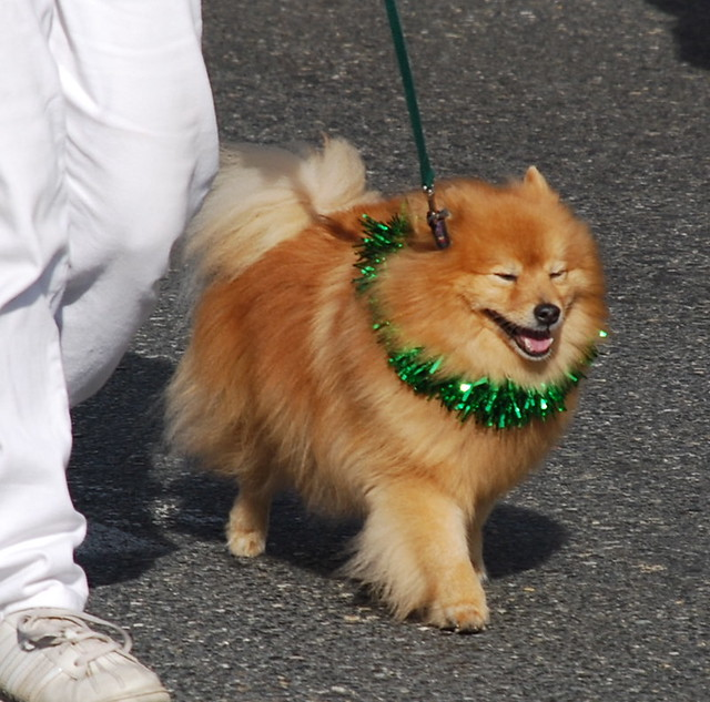 Dog Training Montgomery Al