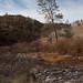 Small photo of Bear Valley, California