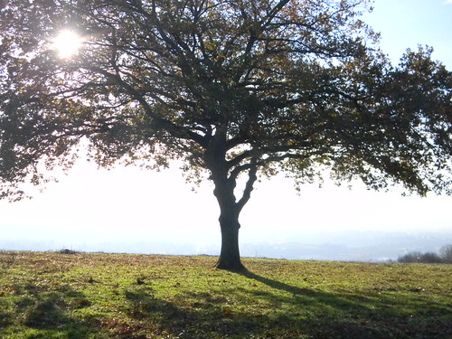Tree on the Downs