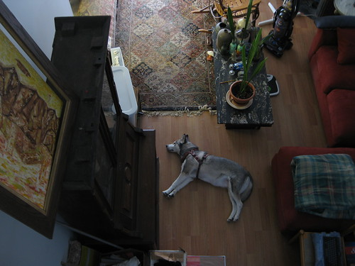 Lulu Sleeping on the Floor