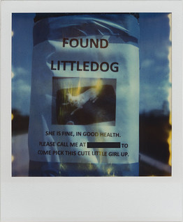 FOUND LITTLEDOG