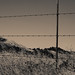 Small photo of Barb Wire