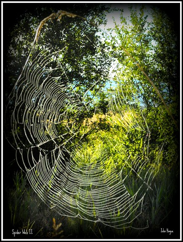 canada nature spider bc wildlife web east kootenay creston