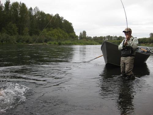 Local steelhead fishing report the caddis fly oregon for Local fishing forecast