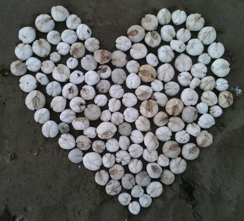 Urchin hearts