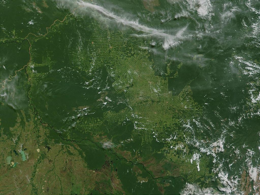 Объёмы вырубок лесов Амазонии увеличились на 88% по сравнению с прошлым годом