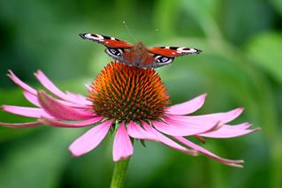 Nations-Unies : De l'« harmonie avec la nature »