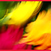 pinceles de luz flor