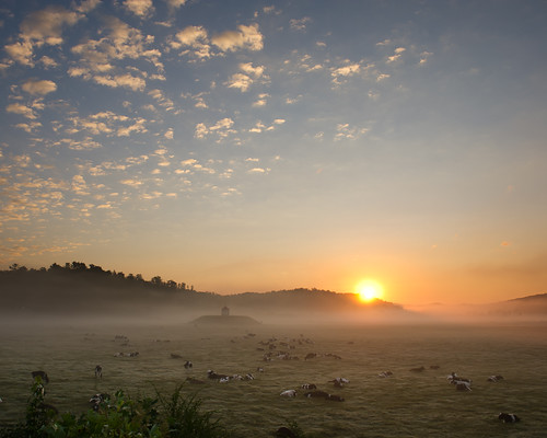 sunrise nikon cows helen indianmound nacoochee matthyatt d3s