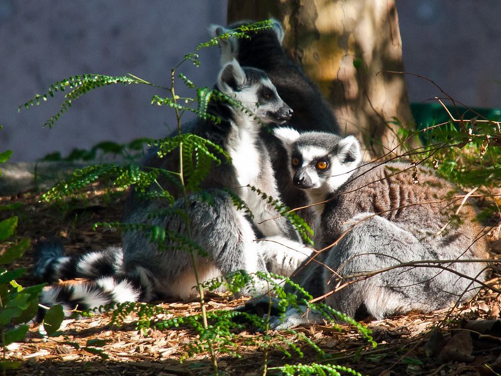 Hotels Near Philadelphia Zoo