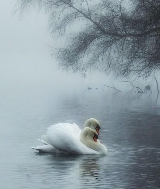 misty lovers