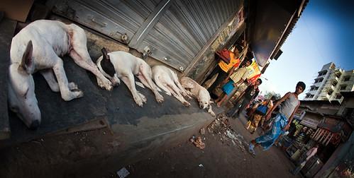 Slum Dogs - Mumbai Slums - India