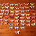 53 butterflies for Eric by Dave and Assia Brill