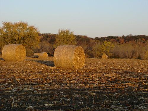 sunrise corn feed bale