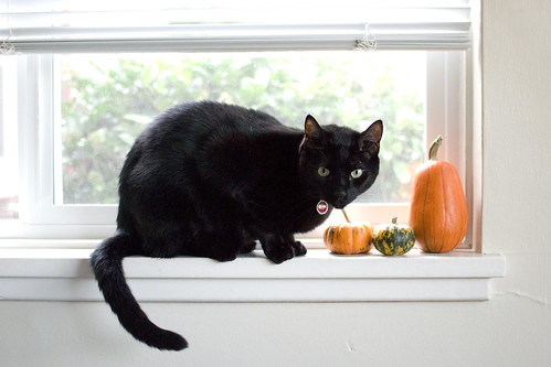 our halloween cat