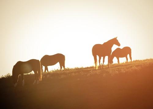 autumn horse fall animal sunrise virginia farm longbranch