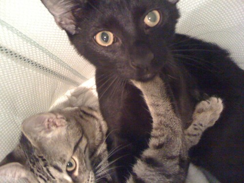 Dash and Harry in the hamper