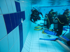 underwater diving, snapshot, sports, leisure, underwater sports, water sport, blue,