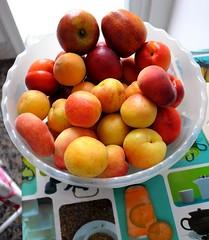 apricot(0.0), plant(0.0), peach(1.0), produce(1.0), fruit(1.0), food(1.0),