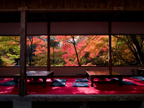 a brief moment of sunlight (Takao, Kyoto)