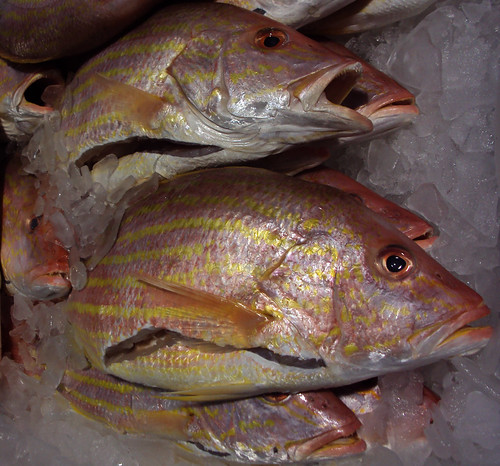Flickriver patrick feller 39 s photos tagged with clearcreek for Kemah fish market