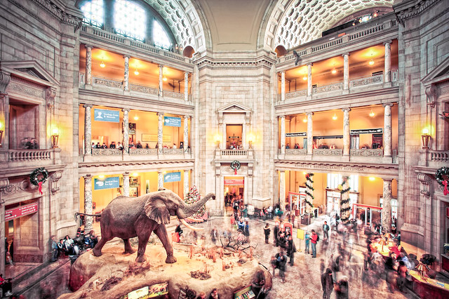 a history of the building of the national museum of natural history in washington dc The gem at the heart of the museum of natural history is a state-of-the-art imax cinema and an 80,000sq ft brushed steel and granite discovery center housing a cafeteria and exhibition space the .