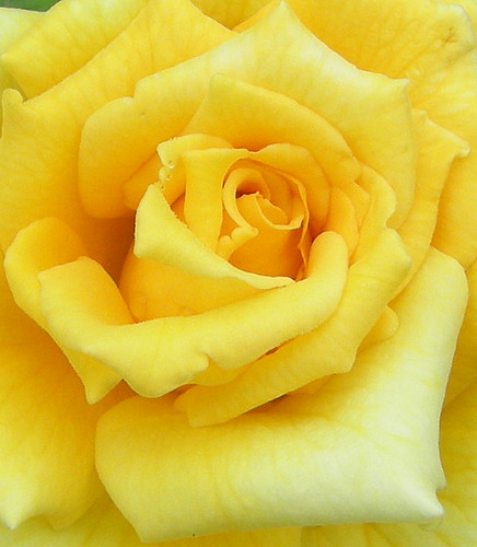 A Soft Yellow