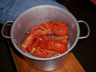 America: lobster in a pot
