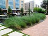 Landscaping edging the village green at CityCentre Houston by peterlfrench