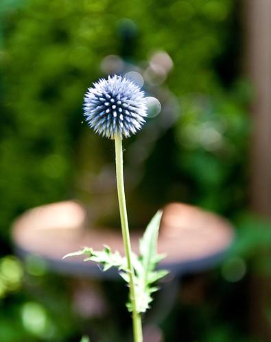 Blue-Nature