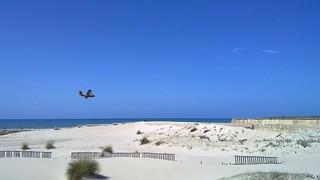 Attēls no Playa de la Cortadura. andalucia cadiz andalusia avión canadair waterplane hidroavión canadaircl215t