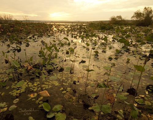 light naturaleza lake sunrise florida scenic paisaje jackson fl tallahassee lilypads paysage