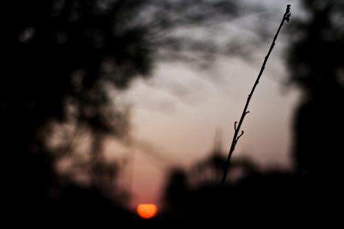 Graveto + Por do Sol