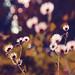 Sprinkled Dreams by Tanjica Perovic