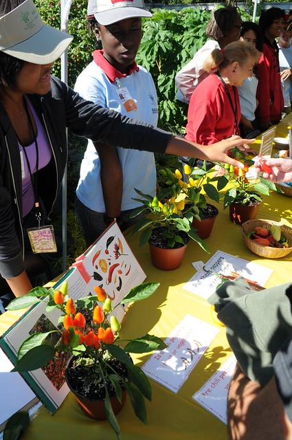 Some of BBG's Garden Apprentices teach visitors about chiles from around the world. Photo by Michael Ratliff.