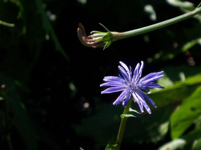 a tiny blossom