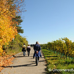 Taking a Walk Through the Vineyards - Thüngersheim, Germany