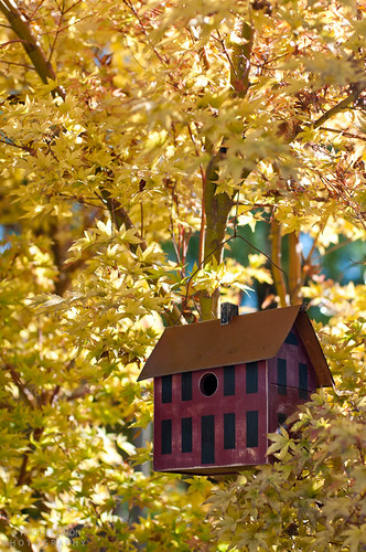 Fall color surrounds the bird house