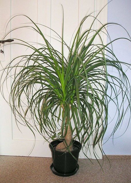 House Plants Safe For Cats And Dogs