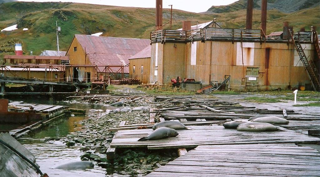 Meat Cookery Grytviken Walfang Station South Georgia Antarktis