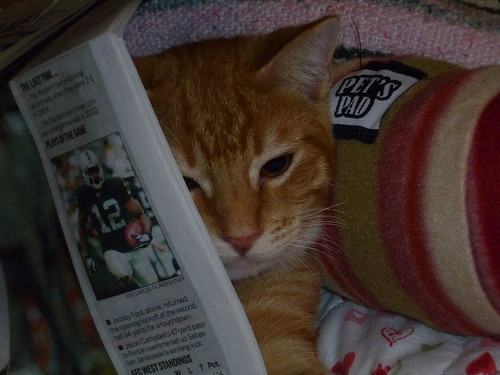 hey buster - reading the sports page?